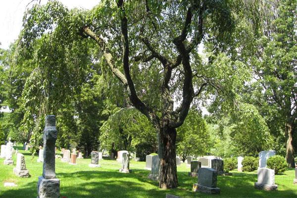 cemetery types